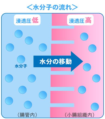 浸透圧による腸管での水分子の流れ