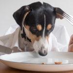 【管理栄養士監修】アスリートの食事に必要なたんぱく質の摂取量