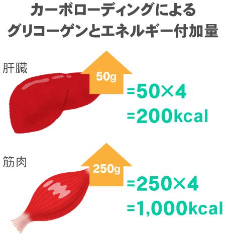 カーボローディングによるグリコーゲンとエネルギー付加量