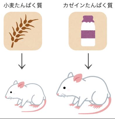 小麦たんぱく質とカゼインたんぱく質での成長度合いの比較