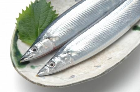 たんぱく質の豊富な魚を食べよう