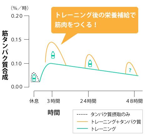 トレーニング後の筋タンパク質の合成のグラフ