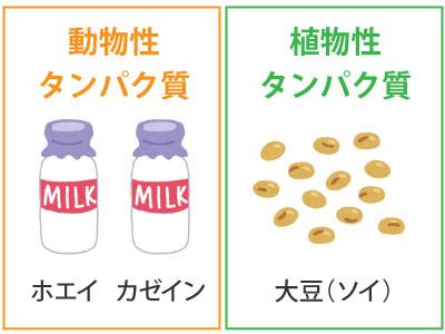 動物性タンパク質と植物性タンパク質